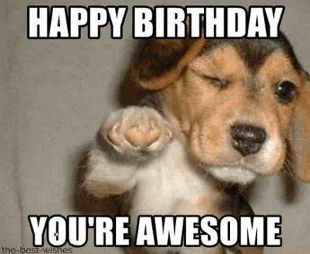 Birthday Wishes Funny Dog Awesome 44 Super Ideas Birthday Meme Dog Funny Happy Birthday Meme Puppy Meme