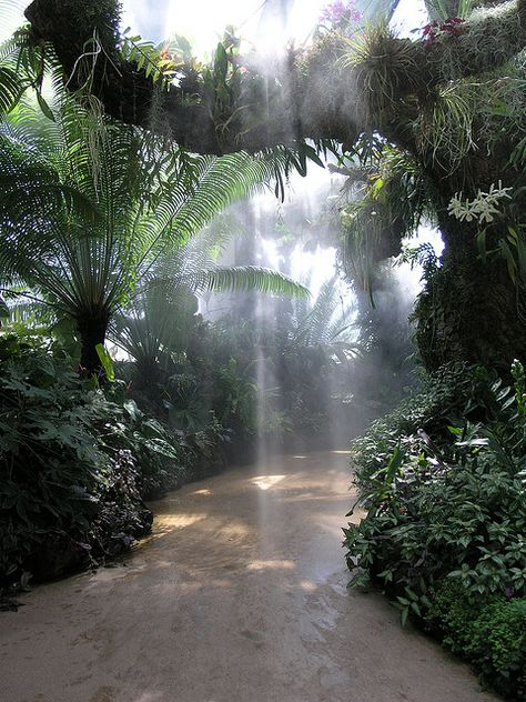 Garden Mist This is the tropical section of the Denver Botanical Garden. It is indoors, since Denver is pretty much the opposite of tropical. Bristol Garden, Bristol Uk, Beautiful World, Beautiful Places, Tropical Paradise, Tropical Forest, Tropical Gardens, Tropical Landscaping, Tropical Beaches