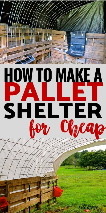 Learn how to make a quick pallet shelter that is quick and inexpensive! Great for a run-in shed for goats, horses, alpacas or any other farm animal! Sheep Shelter, Goat Shelter, Horse Shelter, Pallet Barn, Pallet Shed, Diy Pallet, Goat Shed, Cattle Panels, Goat House