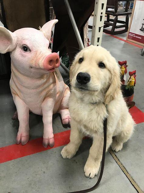 Cutest Pig Planter Animal Planters Pig Cute Pigs