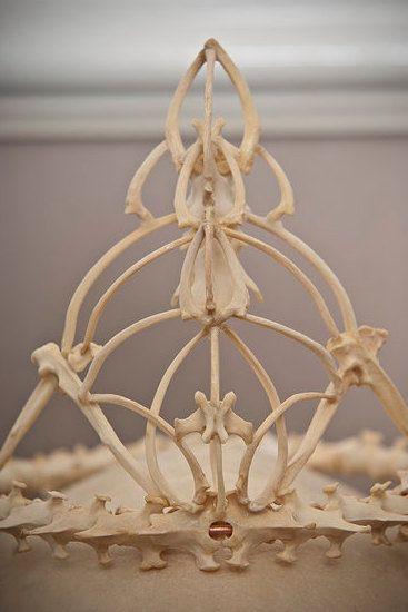 Memento Mori bone crown