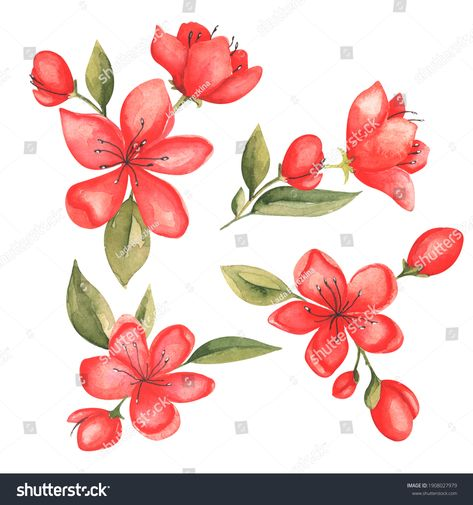 Watercolor set with red flowers on a white background. #redflowers #watercolorflowers #setflowers #spring #red #flowers #paintingflowers #watercolorpaint