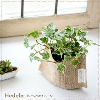トイレにおすすめの観葉植物8選 風水や置き方 育て方のコツは 観葉