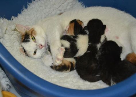 Rescue Cat Mama Brings 4 Fuzzies To Life On Halloween Love Meow Mama Cat Cat Facts Beautiful Kittens
