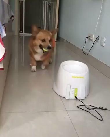 Un chien qui veut jouer à la balle ! ...........  #un #chien #qui #veut #jouer #à #la #balle