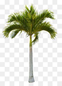 Tree Coconut Clip Art Beautiful Green Coconut Trees Unlimited Download Kisspng Com Dates Tree Tree Tree Psd