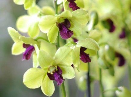 Comment Soigner Les Orchidees Selon Leurs Varietes Orchidee