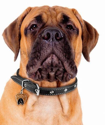 Bullmastiff German Shepherd Mix Puppies For Sale Yukon Canada