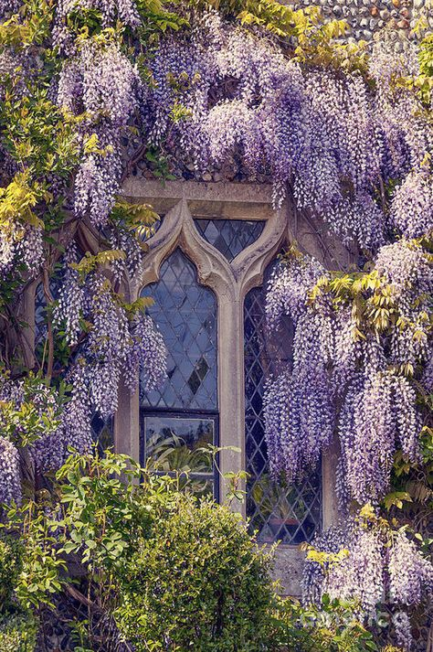 Gothic Windows covered with Pretty Wisteria Window Romantic Living. Beautiful home. Beautiful Gardens, Beautiful Homes, Beautiful Places, Wisteria Tree, Nature Aesthetic, Window Art, Window Boxes, Parcs, Dream Garden