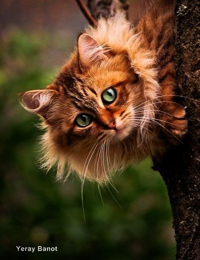 Pin Beautiful Cats For Sale In Karachi Pin With Images Pretty Cats Beautiful Cats Animals