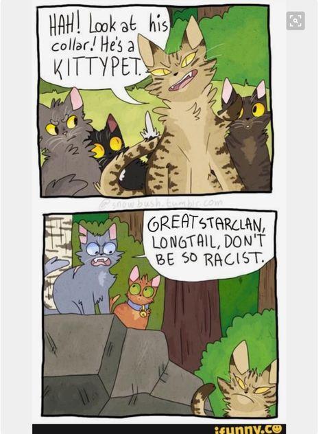 List Of Pinterest Warriors Cats Memes Clean Pictures Pinterest