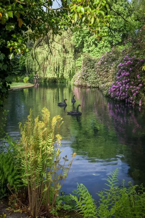 The Gardens at Shute House - Sir Geoffrey Jellicoe's final garden   House & Garden