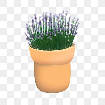Lavender Flowers In Pots Bunga Rancangan Menanam Png Transparent Image And Clipart For Free Download Lavender Flowers Lavender Plant Plant Background