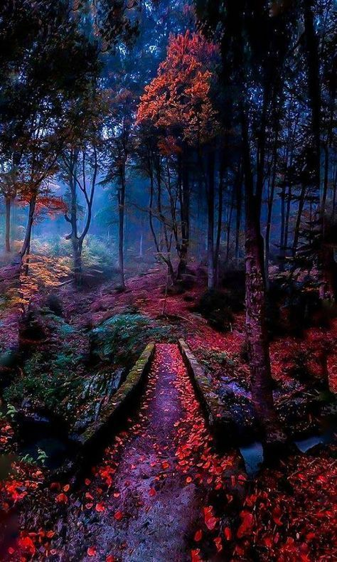 68 Ideas Beautiful Tree Autumn Woods For 2019 628604060474685529 In 2020 Landscape Photography Tips Landscape Photography Nature Beautiful Landscape Photography
