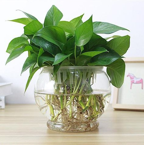 Popular High Borosilicate Glass Hanging Glass Flower Planter Vase Terrarium Container Home Garden Ball Decor