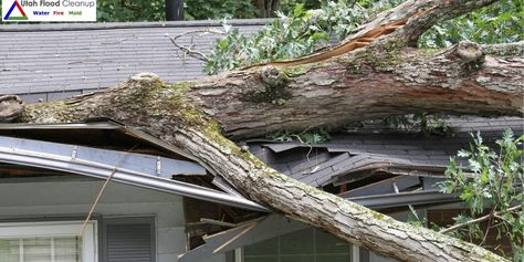 Signs Your Tree Is About To Fall Homeowners Insurance Homeowner
