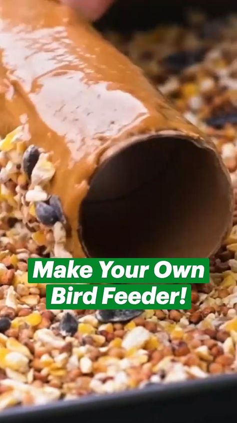 Toilet Paper Roll Crafts: Make A Bird Feeder, Air Plant, Blade