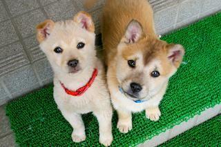 考えておきたい 災害時のペットの避難方法 避難所に行かない防災の教科書 ペット 可愛い 生き物 犬