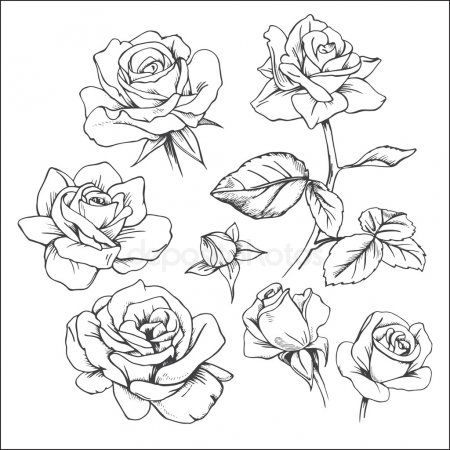 Conjunto De Rosas Dibujados A Mano Dibujo De Rosas Manos Dibujo Dibujos De Rosas