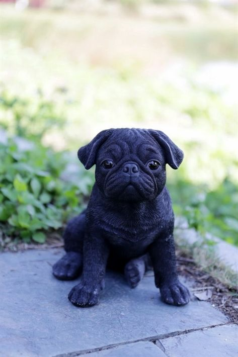 Choosing Plants To Entice Birds And Butterflies To Your Yard Pug