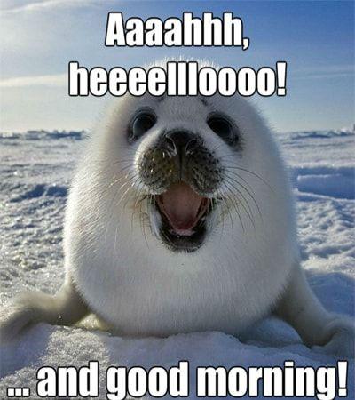 100 Funny Good Morning Memes Memes Of Good Morning Good Morning Funny Pictures Good Morning Funny Funny Good Morning Memes