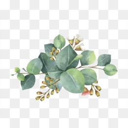 Watercolor Leaves Watercolor Clipart Leaf Green Png Transparent