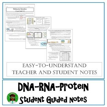 Dna Rna And Protein Synthesis By Brainiac Teacher Teachers Pay Teachers Protein Synthesis Teacher Guides Guided Notes