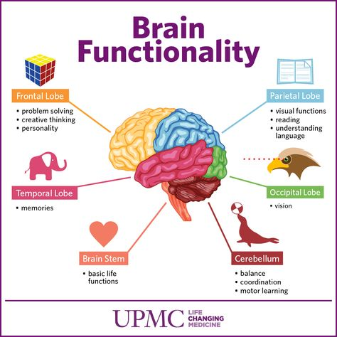 Learn more about the different parts of your brain and how they function, including the cerebrum, cerebellum, and brain stem. The Brain For Kids, Your Brain, Brain Stem, Brain Science, Brain Anatomy, Anatomy And Physiology, Human Brain Parts, The Human Brain, Brain Parts And Functions