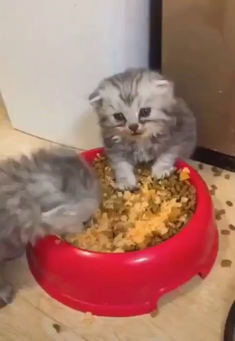Oh No I Think I Ate Too Much Cute Cat Gif Funny Cats Funny