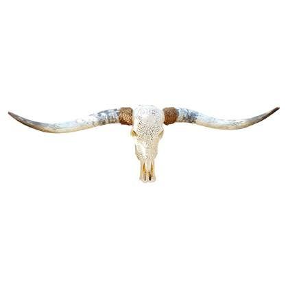 Skull Decoratie Longhorn Skull Gegraveerd Echt Decoratie Longhorns Hoorns