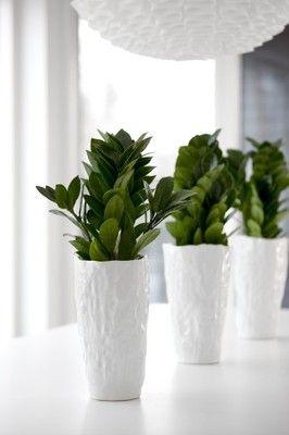 Przedmioty Uzytkownika Zielony Parapet Allegro Pl Plants Planting Flowers Flowers