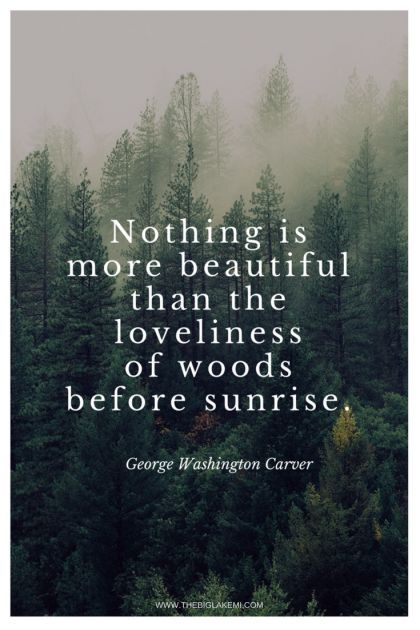 Take Me To The Wood Quotes Nature Quotes Into The Woods Quotes Outdoor Quotes