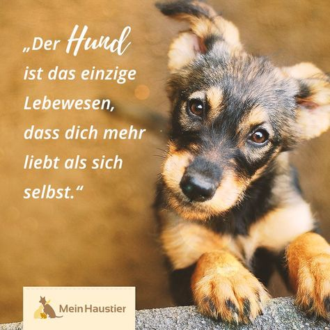 Dogs are so selfless and lovable animals! #wars #mein pet #dog ... #Animals #lovable #selfless