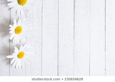 Imagens Fotos Stock E Vetores Similares De Flores Do Jardim Sobre Fundo De Mesa De Madeira Azul Fundo Com Espaco Mesa De Madeira Branca De Madeira Margaridas