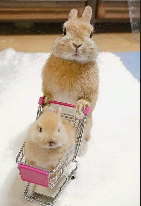 Baby Rabbit in a Baby Cart :)