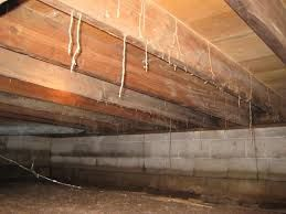 Termite Control Roanoke Va Termite Control Termites Ant Control