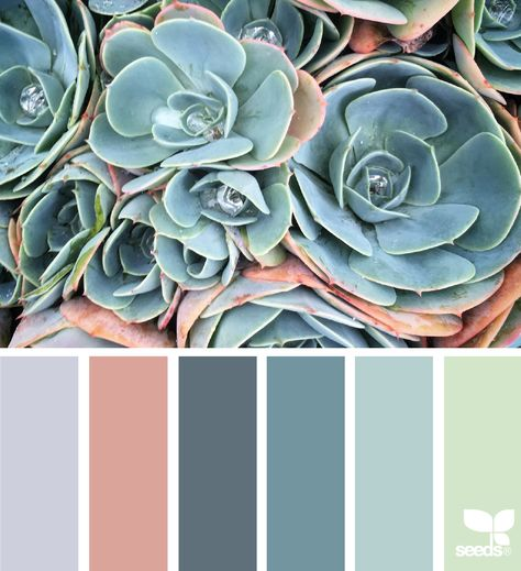 Succulent Hues via @designseeds  #seedscolor #color #colorpalette #color #palette #pallet #colour #colourpalette #design #seeds #designseeds
