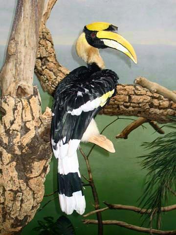 Tropical Birds Beautiful Birds Bird Art