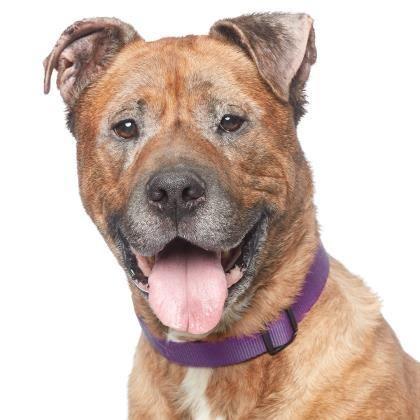 Adopt Marmaduke On Pet Adoption Dogs Terrier Dogs