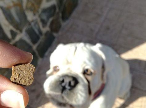 infección de levadura de piel de bulldog