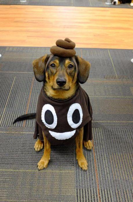 Best Halloween Costume Ideas Kids Toddlers Babies Infants Pets Diy Funny Cute Pet Halloween Costumes Dog Halloween Costumes Diy Dog Costumes
