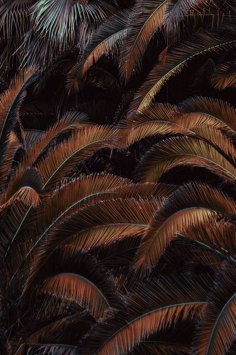 raw Ideas — visualgraphc: Photography by Xuebing DU Brown Aesthetic, Aesthetic Colors, Aesthetic Collage, Black And Brown, Dark Brown, Aesthetic Backgrounds, Colour Board, Pantone Color, Earth Tones