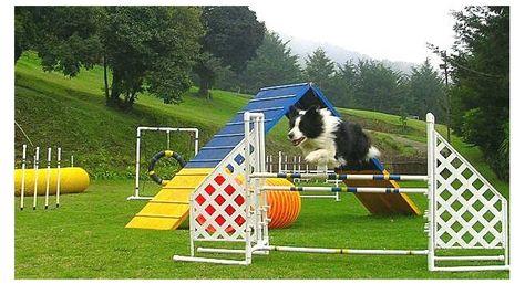 Brunopublicidad 216165219 Std Jpg 656 356 Dog Den