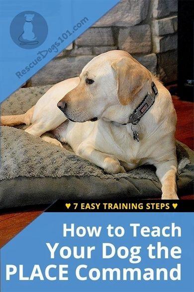 Dog Training Knife Dog Training Richmond Va Dog Training Tricks