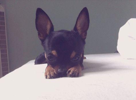 Shoey Pawshake Baden Hunde