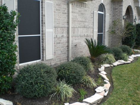 small round bushes with stone (maybe brick) border