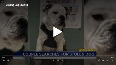 Update Meaty 4 Mo Dog With A Heart Condition Allegedly Stolen