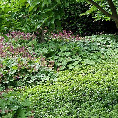 Die Besten Immergrunen Bodendecker Bodendecker Unkraut Im Garten Bodendecker Gegen Unkraut