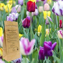 Organic Gardening Beginners Bestorganicgardening Info 9727398850