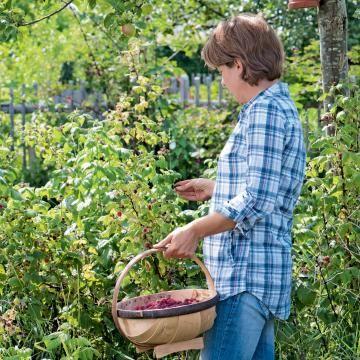 Himbeerenpflege Die 3 Haufigsten Fehler Himbeeren Pflanzen Himbeeren Pflege Mein Schoner Garten Spezial